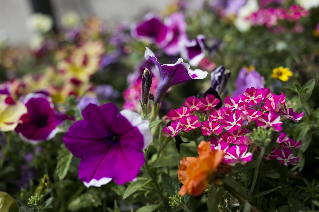 Virágok az önkormányzattól